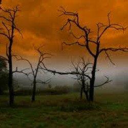La nature en folie